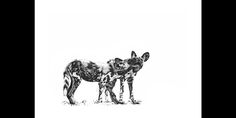 African Wildlife prints by Dave Hamman. Fine art images for sale on fine art canvas or fine art paper. Wildlife image collection of great images African Wild Dog, Wild Dogs, African Animals, Wildlife Art, Animal Prints, Pup, Moose Art, Black And White, Nature
