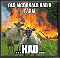 funny farm animals | ... devil cows lol funny pictures animals farm old macdonald mcdonald (18