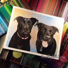 Pet Portraits, Colored Pencils, Labrador Retriever, Pastel, Dogs, Artist, Animals, Instagram, Colouring Pencils