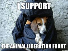 Animal liberation front. Go cruelty free and support animals