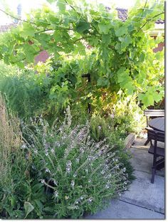 Food Forests and Natural Pest Control - Observations - The Permaculture Research Institute                                                                                                                                                                                 More