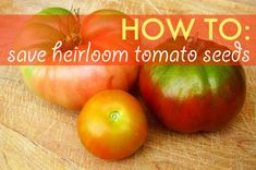 save tomato seeds, saving tomato seeds, seed saving, heirloom tomatoes, tomato seeds, saving seeds, growing tomatoes from seed, seed bank, h...