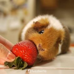 SHNUFFLE SHNUFFLE STRAWBERRY (does not recognize as food)