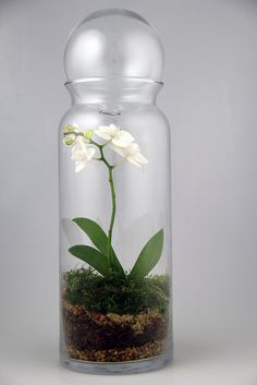 Orchid in a apothecary jar. I want a whole garden of apothecary gardens on my kitchen counters.