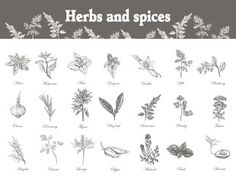 Set Herbs and spices. Sketch vector vintage