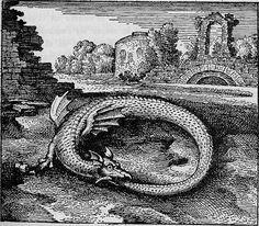 "Michael Maier - Draco Caudam Suam Devorans (Dragon devouring it's own Tail), ""Atalanta Fugiens"", The Ouroboros is an ancient symbol depicting a serpent or dragon eating its own tail. Originating in Ancient Egyptian iconography, the Ouroboros. World Serpent, Sea Serpent, Illuminati, Rose Croix, Alchemy Art, Merian, Ouvrages D'art, Mystery, Mystique"