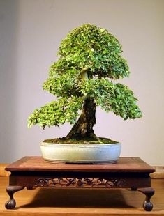 Bonsai Today / Art of Bonsai Photo Contest - Judging Results