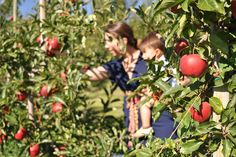7 Places to Go Apple Picking (or Tasting) in Western and Eastern Washington | ParentMap