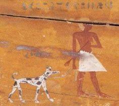 dalmata egipcio