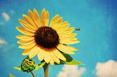 I love sunflowers.  They're so cheerful and every time I see them I feel better.