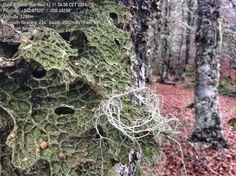 Muestreo bosques (líquenes)