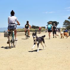 #actijoy #dogs #doghikeday #doghikes #doghike #tripwithdog #dogtrip #sfo #sf #sfdog