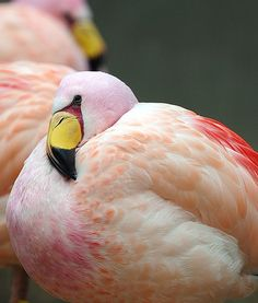 Stunning flamingos are pictured at the zoo in Berlin, perched comfortably. They're all so beautiful.