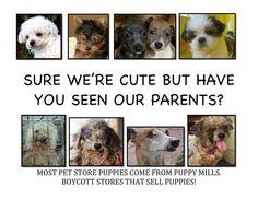 Adopt don't buy!