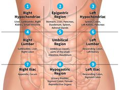 Abdominal pain can have a wide range of causes. Understanding the nine regions and four quadrants of your abdomen can help pinpoint possible origins and identify associated ailments. Human Body Anatomy, Human Anatomy And Physiology, Medical Facts, Medical Information, Nursing School Notes, Nursing Schools, Medical School, Medical Anatomy, Radiation Therapy