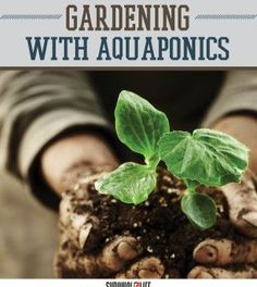 Make A (Nearly) Self-Sufficient Indoor Garden With Aquaponics | DIY Gardening On A Budget by Survival Life http://survivallife.com/2015/04/30/aquaponics-indoor-garden/