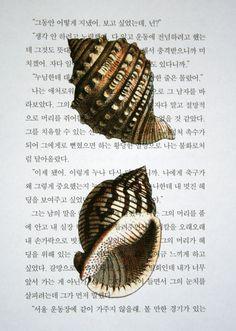 pic idea for my bathroom  Seashells Print on Korean Book Page  5 x 7 by CrowBiz on Etsy, $12.00