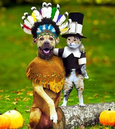 Happy Thanksgiving Weekendd thanksgiving pictures happy thanksgiving thanksgiving quotes funny thanksgiving quotes thanksgiving quotes for family best thanksgiving quotes thanksgiving quotes for friends Funny Thanksgiving Pictures, Friends Thanksgiving, Thanksgiving Cards, Thanksgiving Decorations, Thanksgiving Treats, Thanksgiving Activities, Pilgrims Thanksgiving, Thanksgiving America, Thanksgiving Graphics