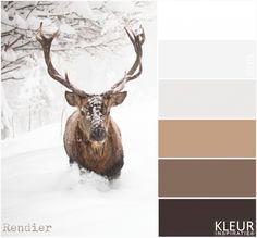 RENDIER - Kleurenpalet wit en bruin tinten - sneeuw - winter