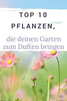 Top 10 Pflanzen, die deinen Garten zum Duften bringen #pflanzen #garten #blumen #duften #outdoor #tipps #blogalong