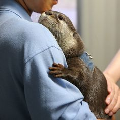 I wish this was me holding this otter!