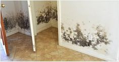 How to Combat Mold in a Flooded House Before you rebuild or restore your water-damaged home, take these steps to keep mold at bay by Gold Coast Flood Restorations Diy Mold Remover, Mold Removal, Home Renovation, Flood Restoration, Flooded House, Get Rid Of Mold, Remove Mold, Toxic Mold, Berber Carpet