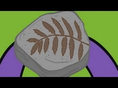 WHAT ARE FOSSILS? - YouTube