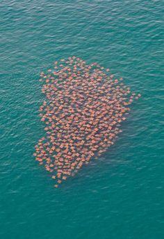 A school of stingrays <3