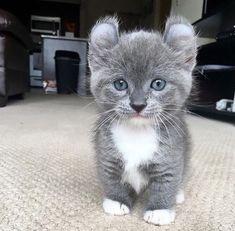 Little miau