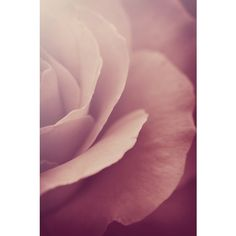 Pink Flower Photography, Dusty Pink Rose Floral Photograph, Vertical... (£12) ❤ liked on Polyvore featuring home, home decor, wall art, pink flower wall art, photo wall art, photo-print, rose home decor and pink rose wall art