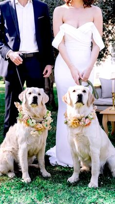 May Weddings, Corgi Dog, Moving Pictures, Happy Dogs, Happy Life, Puppy Love, Marie, Labrador Retrievers, Puppies