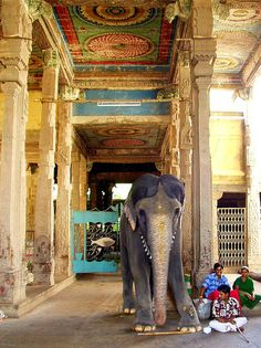 Elephant in Temple by Kamala L, via Flickr #India