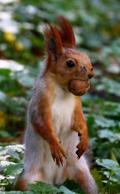 One nut down and many more left to go before I haz enough fer winter!