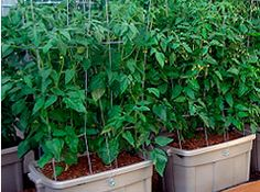 vegetable gardening in containers | Container Gardening Vegetables – Choosing The Right Garden ...