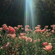 peachy angel aesthetic pale pastel clean Angelic g Plant Aesthetic, Angel Aesthetic, Nature Aesthetic, Flower Aesthetic, Aesthetic Grunge, Spring Aesthetic, Aesthetic Green, Gay Aesthetic, Aesthetic Painting