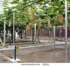 hydroponics | Flickr - Photo Sharing!