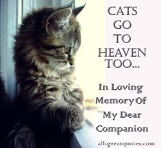 They have to...how could it be heaven without the kitties!!!