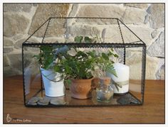 1000 images about plantes on pinterest minis terrarium. Black Bedroom Furniture Sets. Home Design Ideas