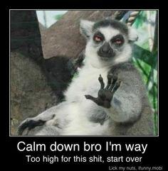 Calm down bro