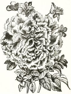 A lovely late-Victorian floral illustration from 1897. #vintage #flowers #illustrations