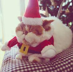 An Adorable Animals Advent Calendar: December 16