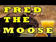"""Fred the Moose"" is from the award-winning CD, Best Kid's Songs! Do you remember, Fred the Moose who liked to drink a lot of juice? This is a silly action and dance song that really gets youngsters up, moving, heart-smart and healthy! Silly Songs, Fun Songs, Kids Songs, School Songs, School Videos, Kids Music Videos, Brain Break Videos, Campfire Songs, Camp Songs"