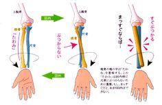 「橈骨 尺骨 運動軸」の画像検索結果