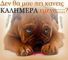 Kalimera Greek Quotes, Funny Images, Good Morning, Favorite Quotes, Life Is Good, Messages, Humor, Sayings, Pets