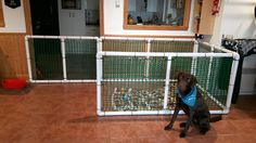 Inside dog enclosure. Pvc pipe
