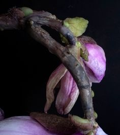 cold porcelain Cold Porcelain Flowers, Macro Photography, Verona, Magnolia, Instagram, Lord, Hands, Awesome, Lorde