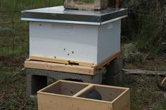 Setting up a Beehive and Putting in the Bees a Real Adventure