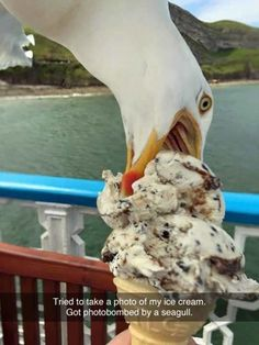 – Tried to take a photo of my ice cream. Greedy bastard Seagull… - The best funny pictures and videos Cute Funny Animals, Funny Animal Pictures, Funny Cute, Funny Photos, The Funny, Random Pictures, Funniest Pictures, Funny Birds, Stupid Pictures