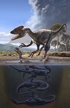 Guanlong wucaii by Raúl Martín for National Geographic Magazine