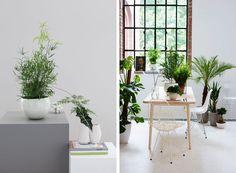 Grønne planter bra for innemiljø #greenplants
